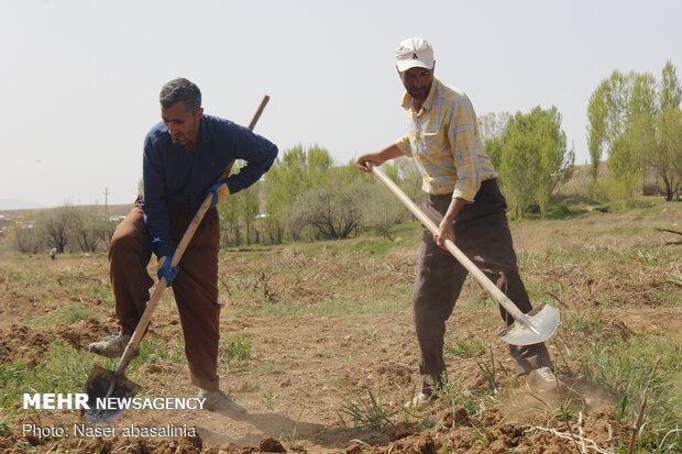 سود، جریمه و کارمزد وام کشاورزان خسارت دیده بخشیده شد